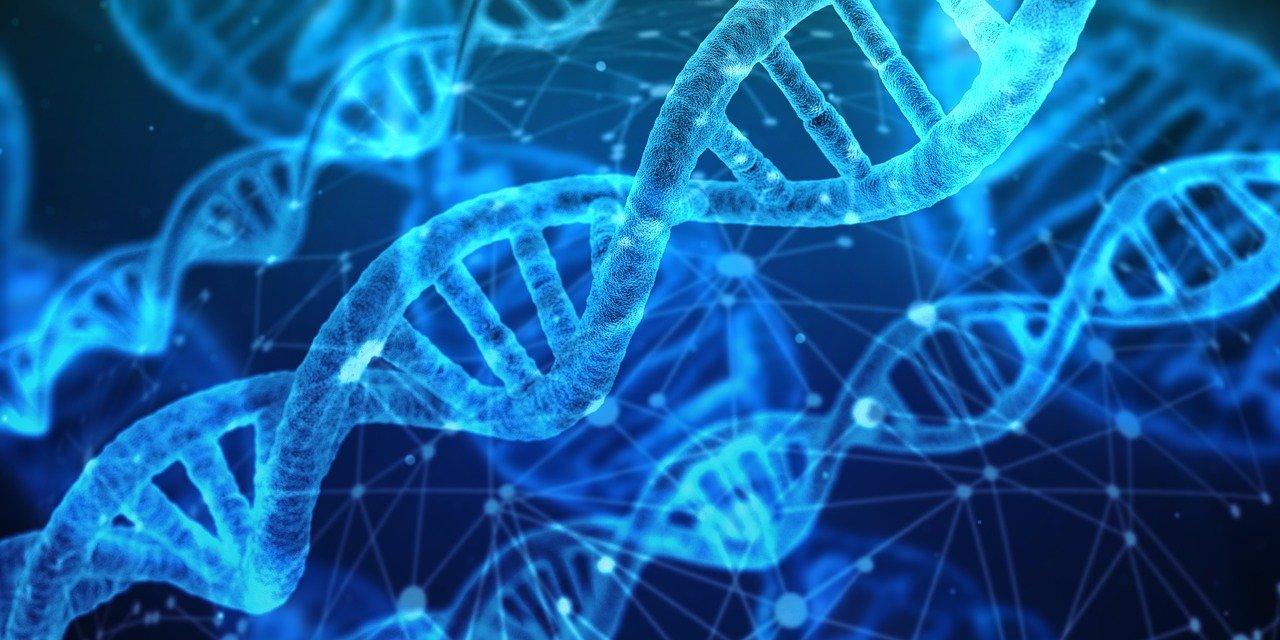 【日本最大の秘密】神の遺伝子YAP遺伝子とは 日本人が果たすべきDの意志